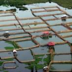 fish farm from a microlight in siem reap, cambodia